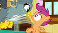 Gabby gets excited in Scootaloo's face S6E19.png