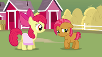 Apple Bloom and Babs Seed S3E04