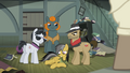 Daring Do incapacitated S4E04.png
