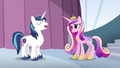 """Shining Armor """"I know exactly who I want"""" S6E1.png"""