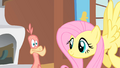 Fluttershy waiting for Philomena to sing S01E22.png