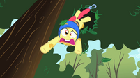 Apple Bloom falling out of a tree S01E23