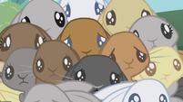 Bunnies huddled together S1E04
