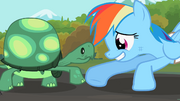 Tank Rainbow Dash foot-bump S2E07.png