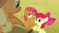 Apple Bloom 'I haven't had any time with Babs!' S3E08.png