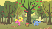 Noteworthy and Cherry Berry apple bucking S01E21