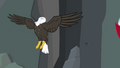 Bald eagle headless... S2E7.png
