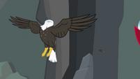 Bald eagle headless... S2E7