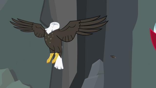 File:Bald eagle headless... S2E7.png