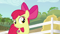 "Apple Bloom ""thinking of somethin' else"" S6E14.png"