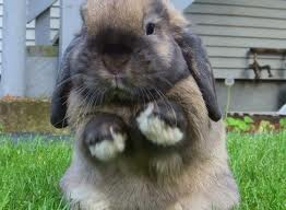 File:Standing-up bunny.jpg