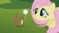 Fluttershy thanks squirrel S01E10