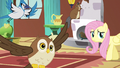 Fluttershy hello S3E13.png