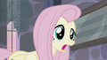 """Fluttershy """"I think they're nice"""" S5E02.png"""