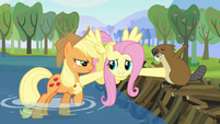 Fluttershy comes between Applejack and the beaver S03E10