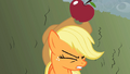 Apple drops onto Applejack's head S2E01.png