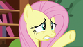 """Fluttershy """"be careful!"""" S7E5.png"""
