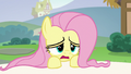 "Fluttershy ""up all night calming the animals down"" S6E21.png"