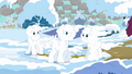 Ponies covered in snow S03E13.png