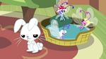 Breezies in Angel's basket S4E16