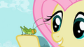 Fluttershy with cricket S2E07.png