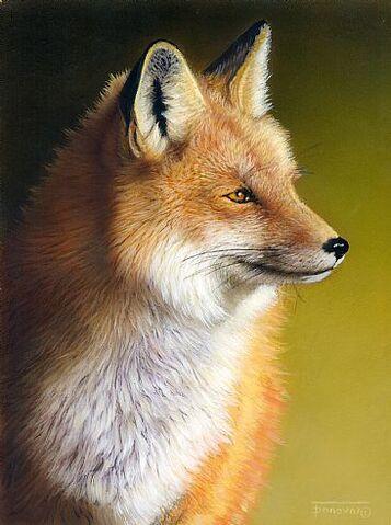 File:Red fox.jpg