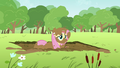 Fluttershy in mud S2E22.png