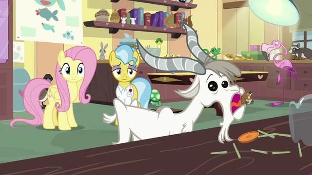 File:Fluttershy and Dr. Fauna see goat eating carrot pops S7E5.png