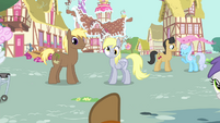 Trenderhoof pointing towards Derpy and a stallion S4E13