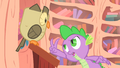 Spike holding two claws up to Owlowiscious S1E24.png