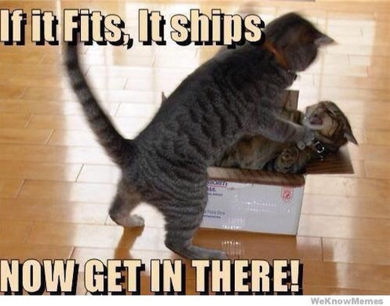 File:Funny cat pic cute shipping1.jpg