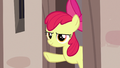 Apple Bloom giving Scootaloo the signal S7E8.png
