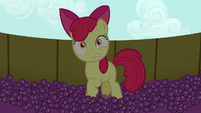 Apple Bloom in stunned surprise S5E17