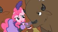 Pinkie Pie And A Buffalo S1E21