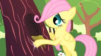 Fluttershy filly knocking on tree trunk S01E23