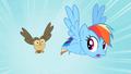 Rainbow Dash Owlowiscious 1 S02E07.png