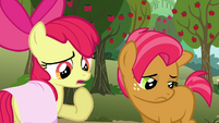 Apple Bloom 'Guess what we're tryin' to say is' S3E04