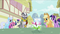 Zecora and ponies looking at the flower S2E06