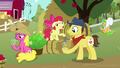 Apple Bloom pours more cider for Sweet Apple Admirer S7E14.png