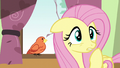 Fluttershy looking concerned S6E11.png