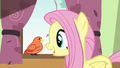 Fluttershy greeting Constance S6E11.png
