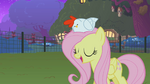 Fluttershy and the chicken S01E17