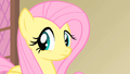 Fluttershy concerned about the health of the Princess's pet S1E22.png