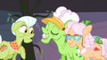 Granny Smith and Apple Rose admiring Applesauce's dentures S03E08.png