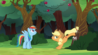 Applejack bucking the apple tree again S6E18