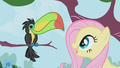 Fluttershy looks at a Toucan S1E03.png