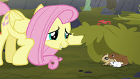 Fluttershy finds animals hiding S5E23