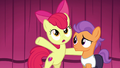 """Apple Bloom """"I'm here to convince you"""" S6E4.png"""