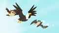 Owl, eagle, falcon and bat flying S2E07.png