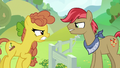 Pear family mare vs. Apple family stallion S7E13.png